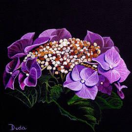 Susan Duda - Lace Cap Hydrangea