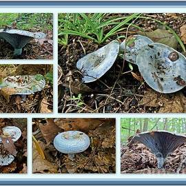 Mother Nature - Lactarius Indigo Mushrooms