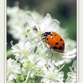 Irina Hays - Lady bug and fly