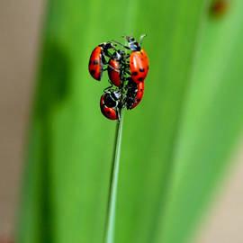 Patricia Sanders - Lady Bug Social