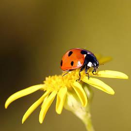 Grant Glendinning - Ladybird