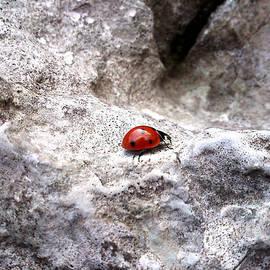 Lucy D - Ladybird