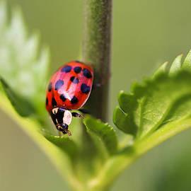 Neil James Brain - Ladybird
