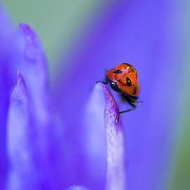 Priya Ghose - Ladybug Adventure