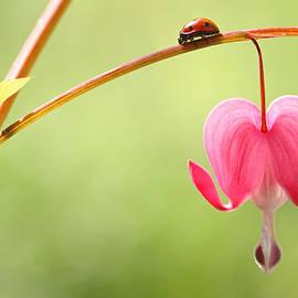 Peggy Collins - Ladybug and Bleeding Heart Flower