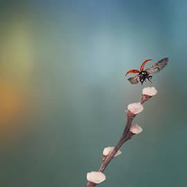 Krasi Matarov - Ladybug