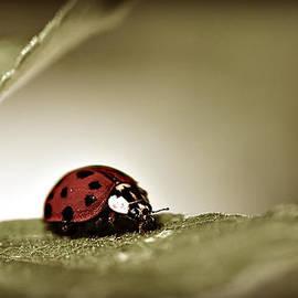 Laura Buchanan - Ladybug