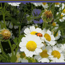 Heidi Manly - Ladybug Leisure
