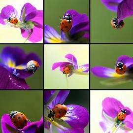 Lisa Knechtel - Ladybug on Parade