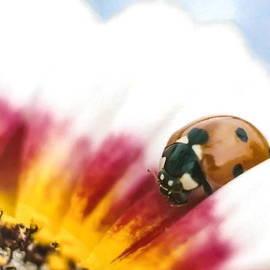 Diane Backs-Mancuso - Ladybug Paint