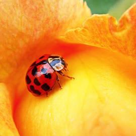Rona Black - Ladybug
