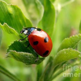 Snezana Petrovic - Ladybug
