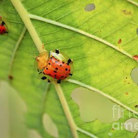 Image World - Ladybugs