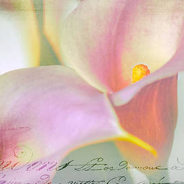 Julie Palencia - Language of a Calla Lily