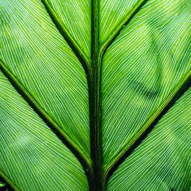 Sean Kirkpatrick - Large wet leaf