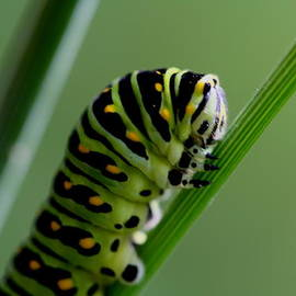 Larry Trupp - Larva...caterpillar