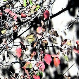 Eric Forster - Last Leaves 6