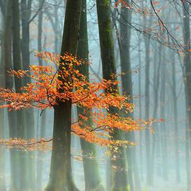 Lars Van de Goor - Last Leaves