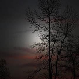 Ella Char - Last Light