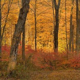 Stephen  Vecchiotti - Late Day Autumn Light
