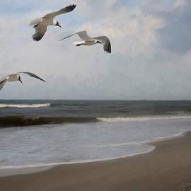 Forest Stiltner - Laughing Gulls Over Nags Head
