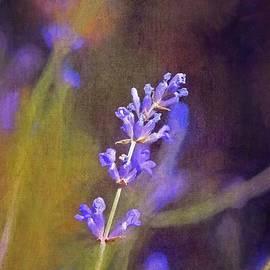 Pamela Cooper - Lavender 9