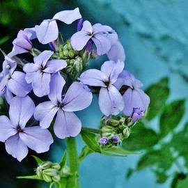 VLee Watson - Lavender Against Blue