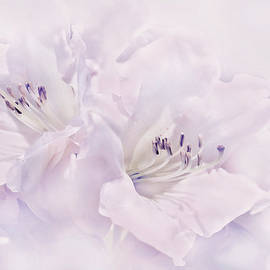 Jennie Marie Schell - Lavender Azalea Flowers