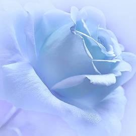 Jennie Marie Schell - Lavender Blue Rose Flower