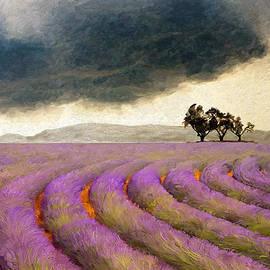 James Shepherd - Lavender curve