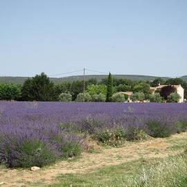 Pema Hou - Lavender Farm