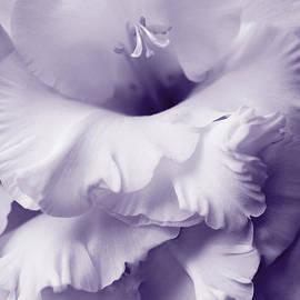 Jennie Marie Schell - Lavender Lace Gladiola Flower
