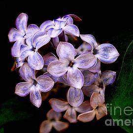 Janice Rae Pariza - Lavender Lilacs