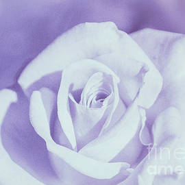 Arlene Carmel - Lavender Love