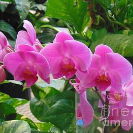 Charlotte Gray - Lavender Orchids