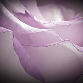 Sandra Foster - Lavender Rose Macro