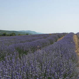 Pema Hou - Lavender Sky