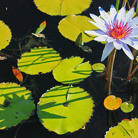 Suzanne Gaff - Lazy Afternoon at the Lily Pond