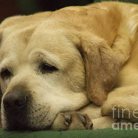 Heiko Koehrer-Wagner - Lazy Pet Series 3
