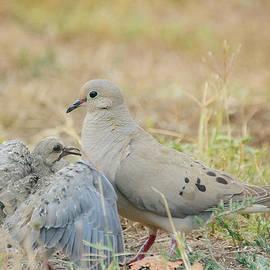 Fraida Gutovich - Le Petite Dove