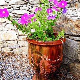 Cristina Stefan - Anduze Flower Pot with Petunias