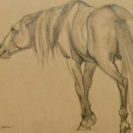 Jani Freimann - Lead Stallion