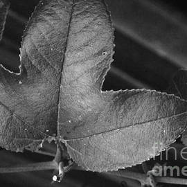 Raphael Bruckner - Leaf in Black and White