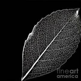 Walt Foegelle - Leaf In Filigree
