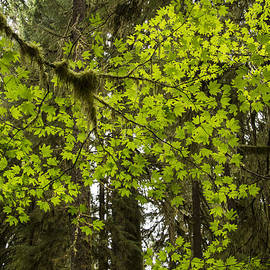Jean Noren - Leaf Lace