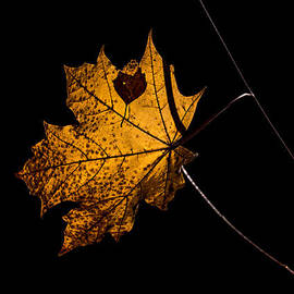 Leif Sohlman - Leaf Leaf