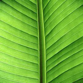 Philippe Meisburger - Leaf line