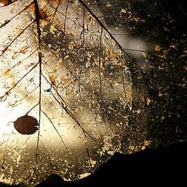 Katie Wing Vigil - Leaf Skeletons