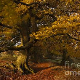 Anne Gilbert - Leafy Lane