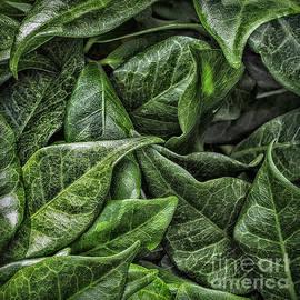 Walt Foegelle - Leaves 623